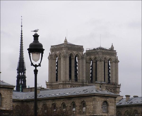 Mouette Parisienne !